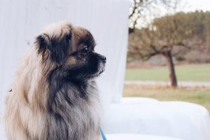 Quelles sont les conditions de réussite lors du dressage d'un chien ?