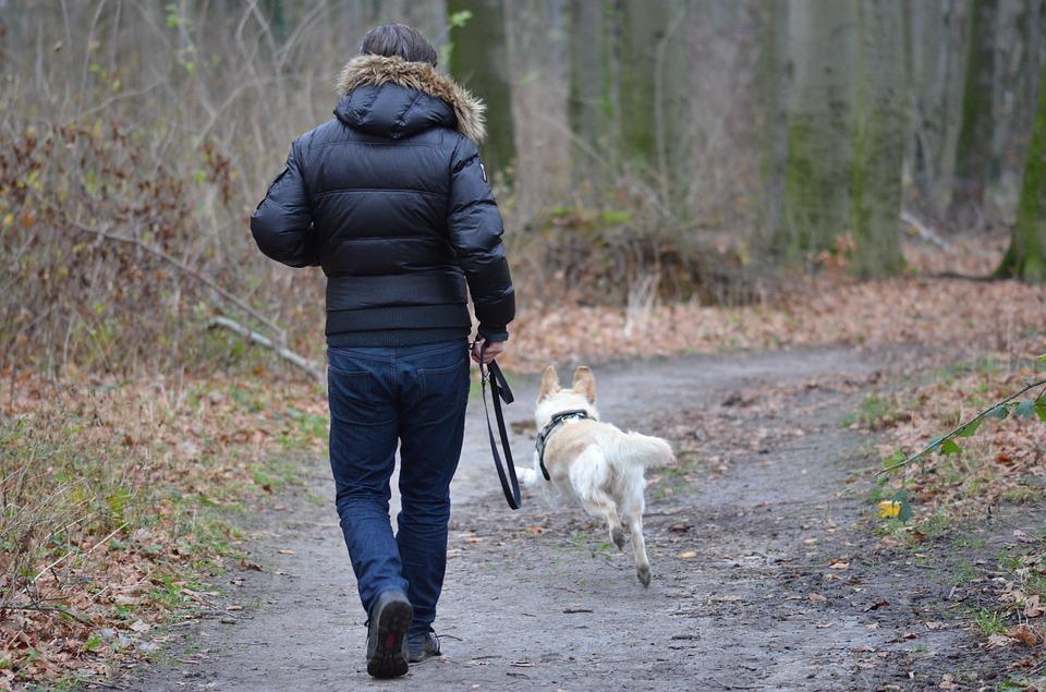 Pourquoi la balade journalière est si importante pour un chien ?