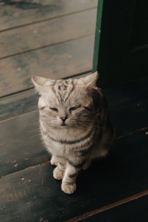 Le chat : que lui donner pour une alimentation équilibrée ?