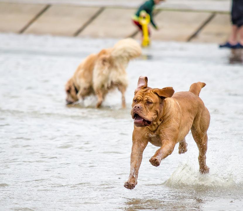 Que faire pour que votre chien n'ait pas de puces ?