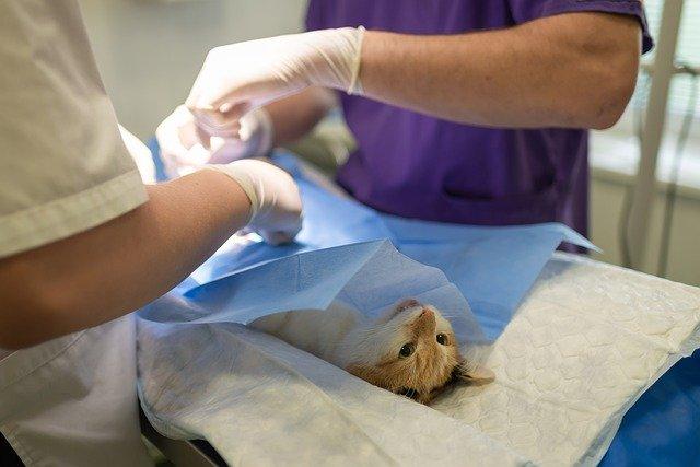 Les matériels vétérinaires pour traiter les chiens et chats : que faut-il savoir ?