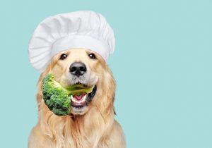 Une bonne alimentation pour un chien en pleine santé
