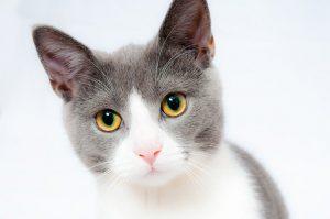Tout ce que vous devez savoir sur les colliers GPS pour chat