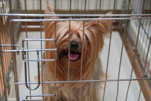 Read more about the article Cage pour chien, un accessoire indispensable